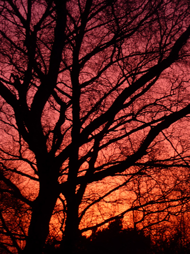 The last vestiges of light through the bare oak trees
