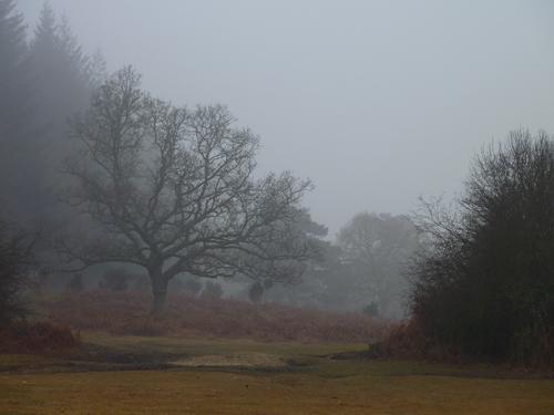 Mist shrouds Linford Bottom