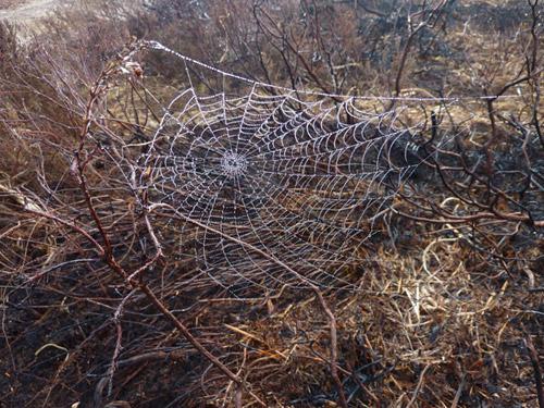 A spiders web glistening