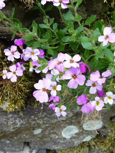 Flowers in a wall - wall flowers?
