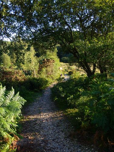 The path down through Foulford passes through birch and bracken...