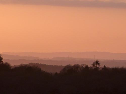 Pink gradations in Dorset