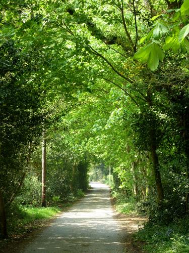Burcombe Lane in the green