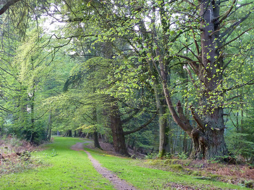 South Oakley path