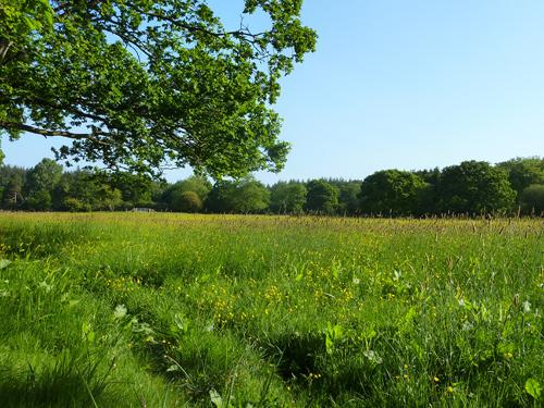 A hayfield