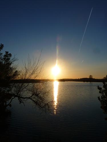 Fox Hills Pond