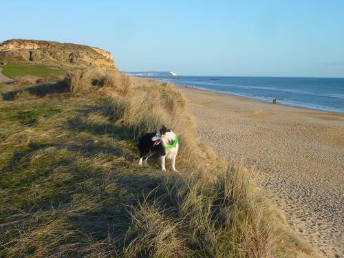 Hengistbury Head, Harry and the Isle of Wight