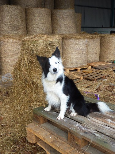 Fetching hay with Harry